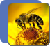 Apiary Energy and Information Technologies