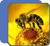 Пасека биоэнерго-информационных технологий